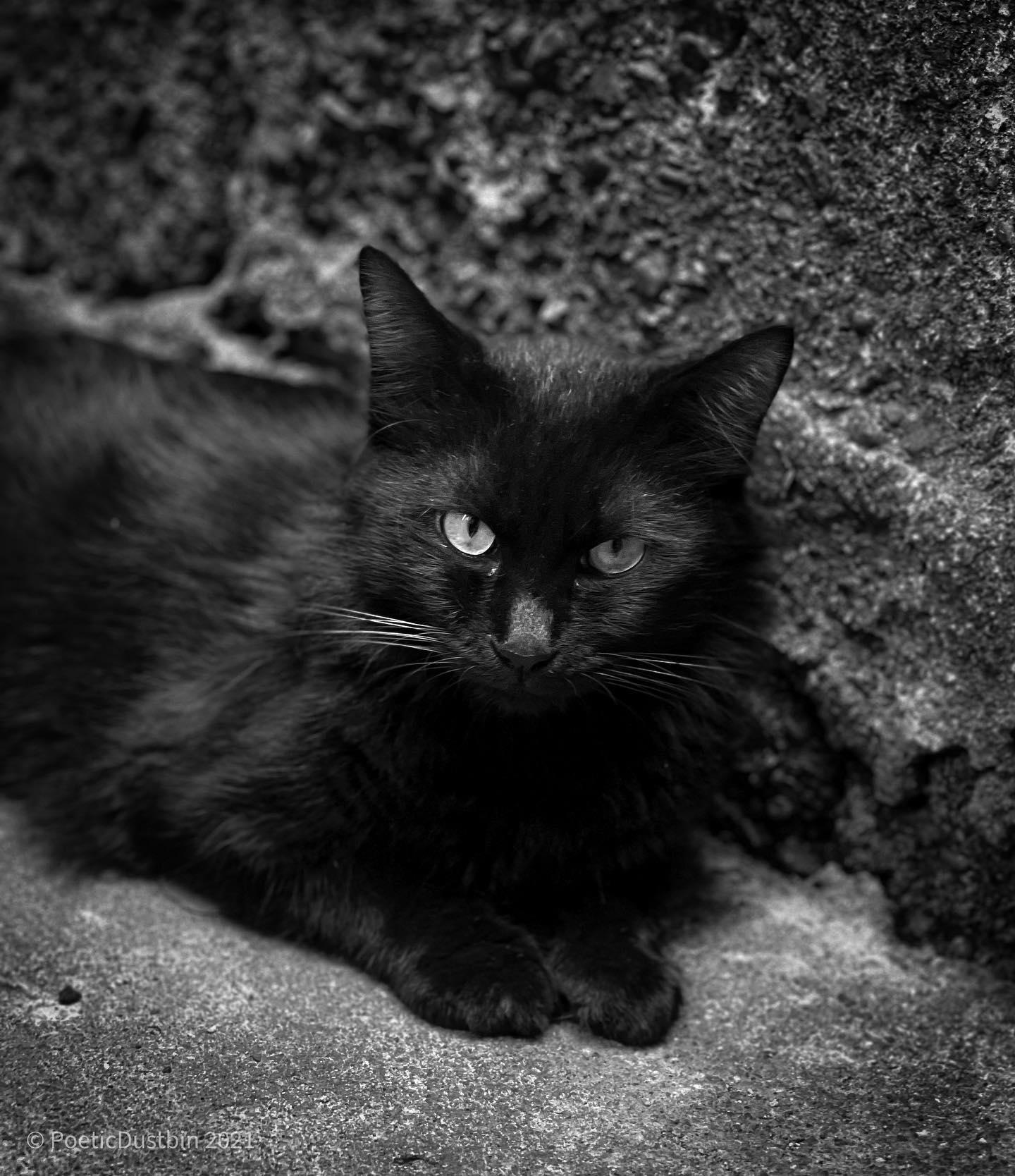 Not a Grumpy Cat - Poetic Dustbin