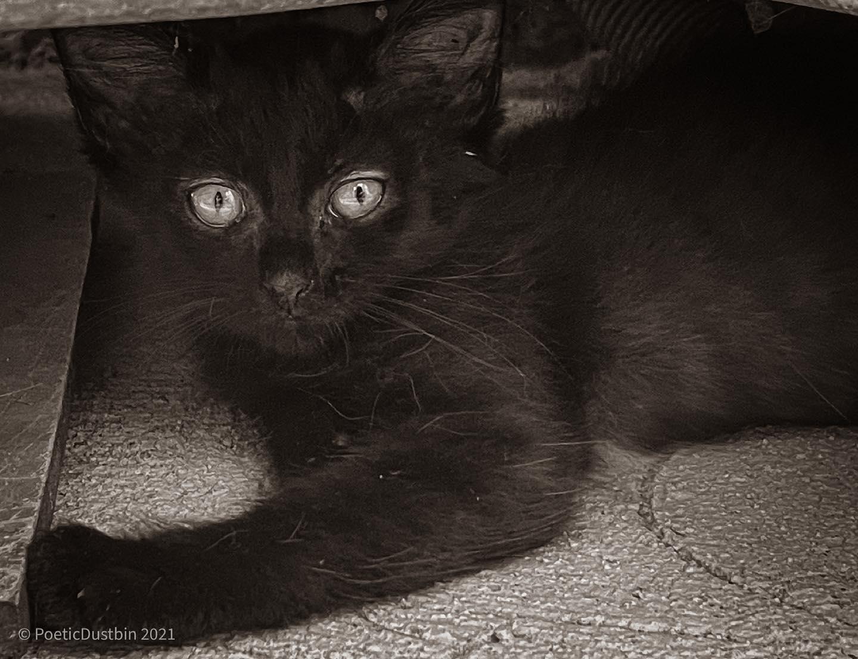 Our Kitten - Floss - Poetic Dustbin