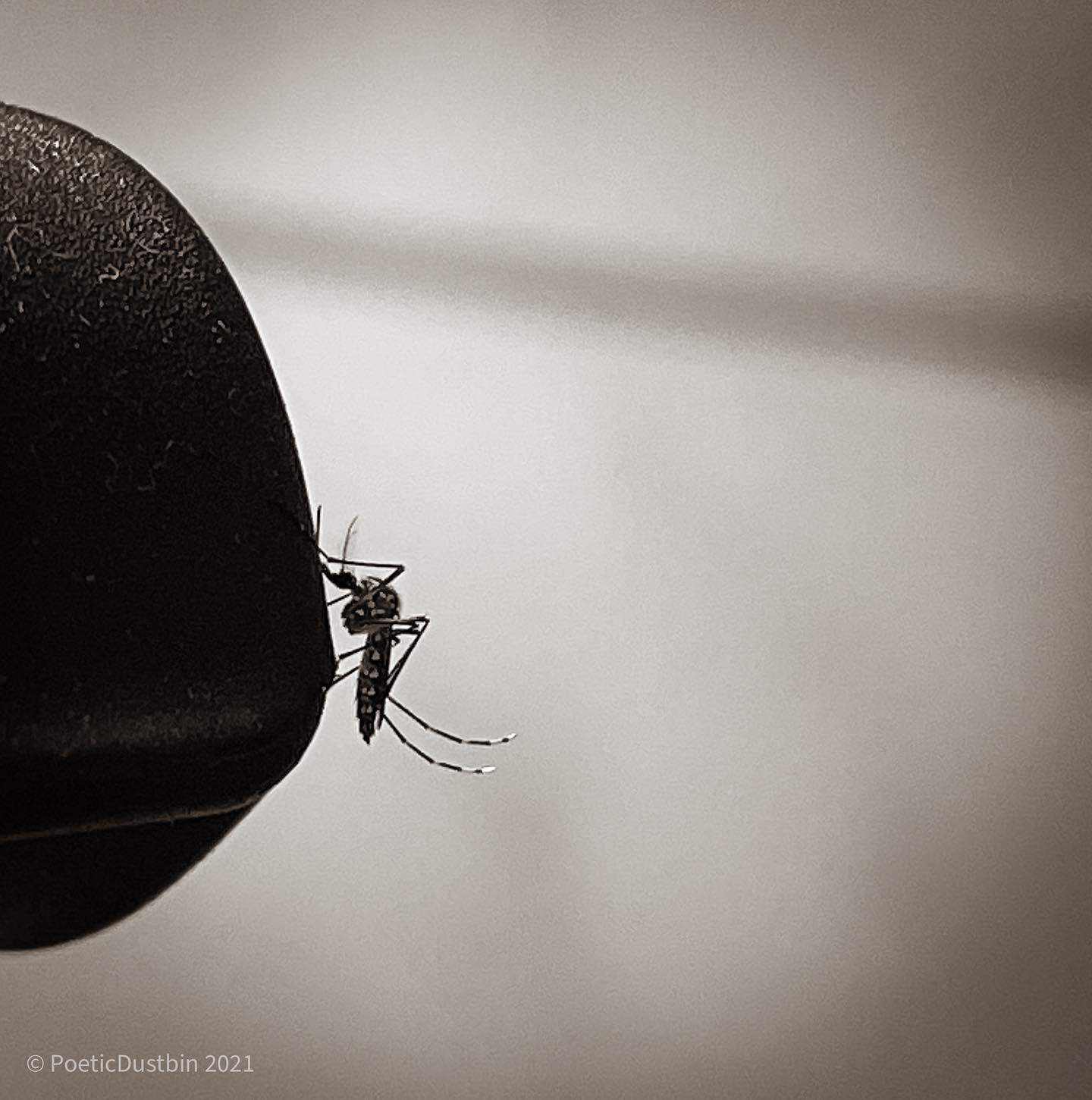 We are far more dangerous than any mosquito