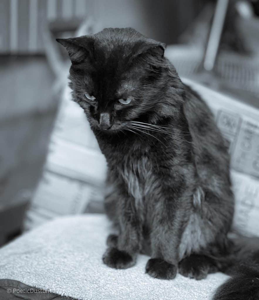 Our Alpha Cat