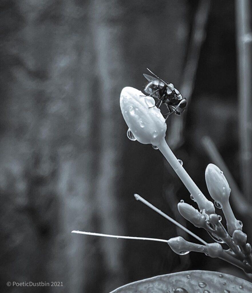 Dark Poetry - Still a Fly